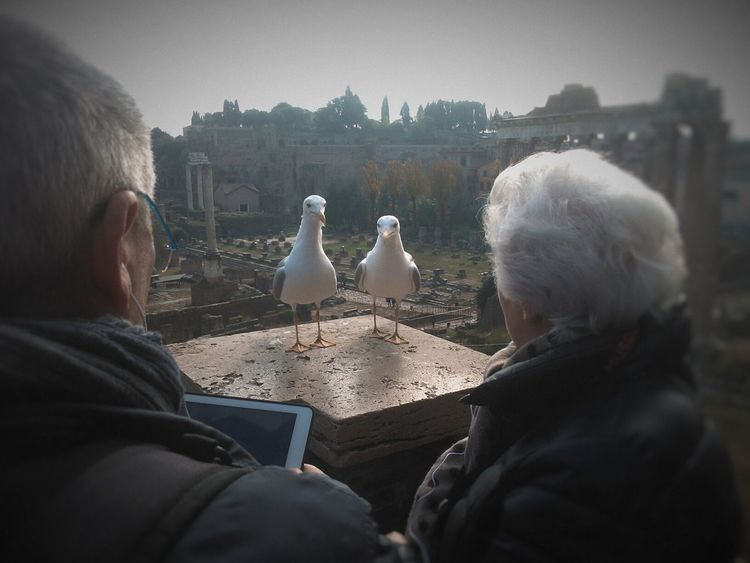 Seagull Seagulls In The City Seagulls Hungry Seagulls Real People People People Photography I Love My City Streetphoto Street Life Walking Around The City  Urban Exploration Roma Rome Streets Of Rome Birds Birds Of EyeEm  Birdwatching In Rome Tourists Random People EyeEm Italy Capture The Moment Glance