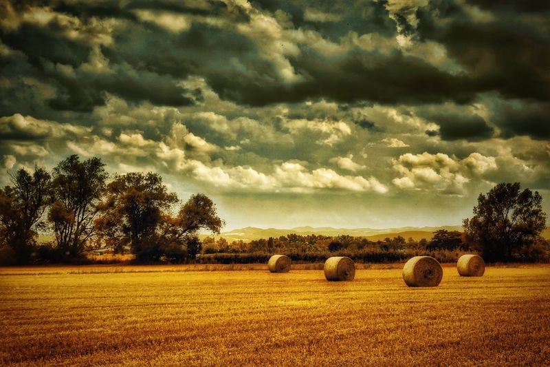 Field Bale  Hay Tranquil Scene Agriculture Rural Scene Harvesting Tree Landscape Nature Sky Beauty In Nature Cloud - Sky Outdoors Cultivated Land Austria Mystical Atmosphere Landscape_photography A Photo Like A Painting Melancholic Landscapes Landscape Photography