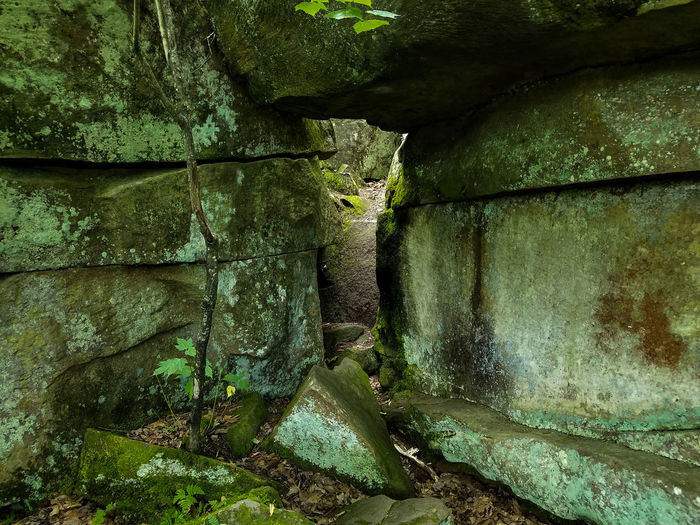 No People Day Outdoors Green Beauty In Nature Nature Green Color Rock Rock Formation Cave Leaves Fall Minnesota Tree Path Forest Pathway In The Forest Pathway Explore State Park  State Forest Nature Photography Forest Photography Growth Rocks The Great Outdoors - 2018 EyeEm Awards