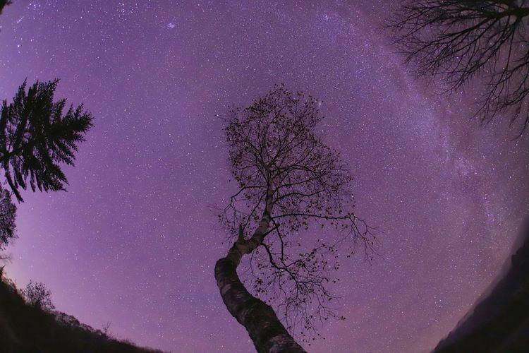 上を向いて歩くのは危険だよー⚠️暗いし滑るし落ちちゃうよー😅 銀河鉄道の夜♪ Astronomy Galaxy Space Milky Way Tree Star - Space Constellation Star Field Star Trail Purple