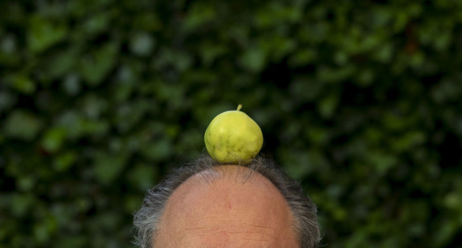 Cropped image of person holding apple against tree