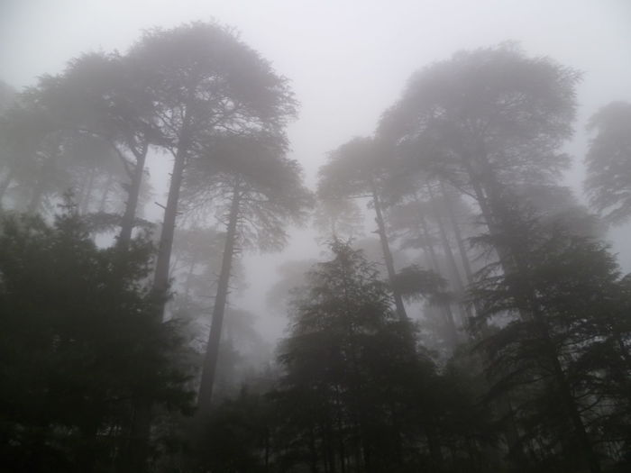 Nature Tree Weather Fog Forest Beauty In Nature No People Outdoors Morningclick Mobilephotography