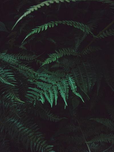 mountain forest Landscape EyeEm Best Shots EyeEm Best Shots - Nature Nature Beauty In Nature Macro Minimalism Green EyeEm Best Edits Forest Leaf Fern Close-up Sky Green Color Needle - Plant Part The Great Outdoors - 2018 EyeEm Awards