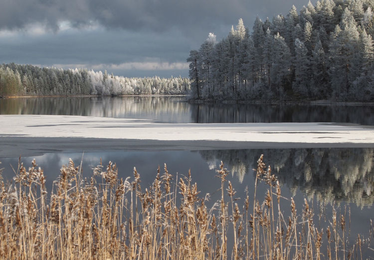 Lapland Scandinavia Beauty In Nature Cold Temperature Day Growth Lake Lake View Nature No People Outdoors Scenics Sky Snow Tranquil Scene Tranquility Tree Water Winter Shades Of Winter
