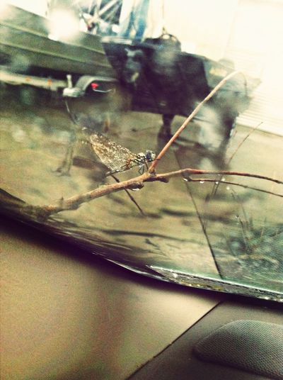 This Dragonfly On A Stick #aftermath #rain #woah