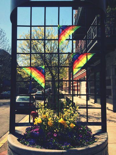 Rainbow Kites Chicago Boystown Walking Around Rainbow Gay Pride Taking Photos