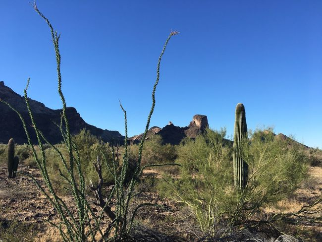 Saddle Mountain near Tonopah, Arizona Desert Landscape Desert Beauty Desert Arizona Tranquility Clear Sky Growth Day Beauty In Nature Tranquil Scene Saguaro Cactus Scenics Sky