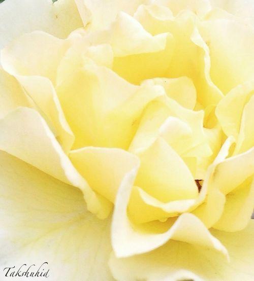 in our garden Flower_Collection Flowerporn EyeEm Nature Lover Flower Collection