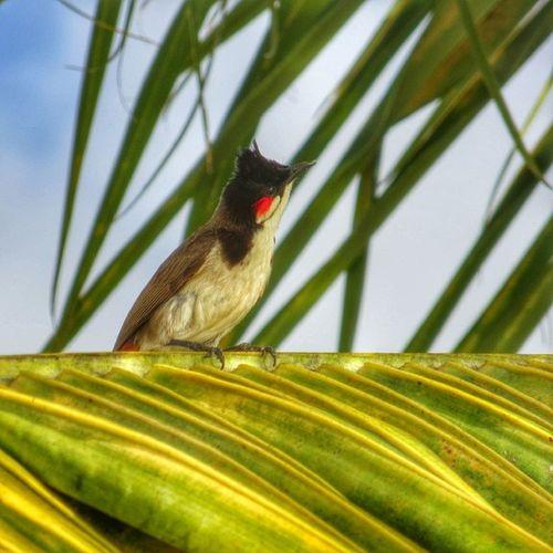 La #merle de l'île #Maurice Nature Bird Nature_seekers Maurice Nature_shooters Birdstagram Bird_watchers_daily Merle Rsa_nature Nature_obsession Igersmauritius Jehaiscesmoustiquesdem