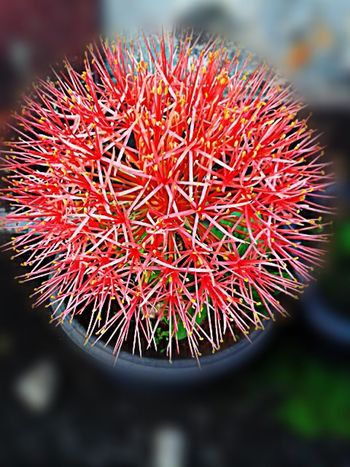 No filters Nature Flower Indonesian Photography