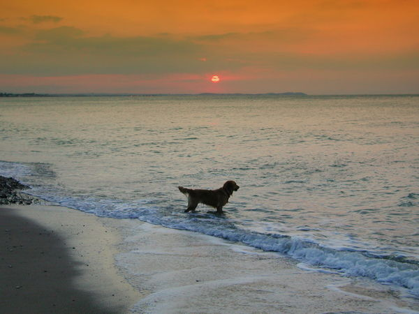 Beach Beauty In Nature Dog In The Beach Golden Retreiver Nature No People Outdoors Scenics Sea Sea And Sky Sky Sun Sunrise On The Beach Sunset Water