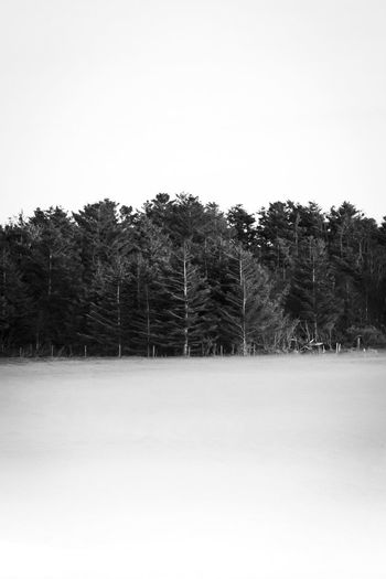 Tree Trees Beauty In Nature Clear Sky Cold Temperature Day Fog Foggy Forest Glade Landscape Mood Moody Nature No People Outdoors Scenics Sky Snow Tranquil Scene Tranquility Tree Winter