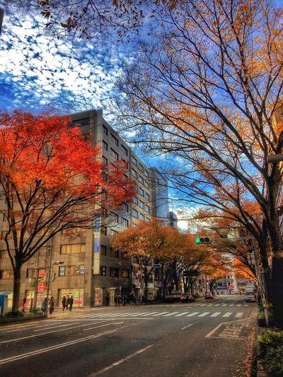 Fukuoka City  Fukuoka,Japan Japan Autumn Colors Streetphotography Street Taking Photos Colors Eye4photography  Streetphoto Enjoying Life Hello World WonderfulJourney Streamzoofamily TheVilleAtEyeem Color Explosion Colorful