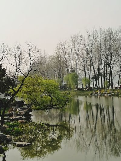春天的影子 Tree Water Bird Lake Reflection Branch Sky