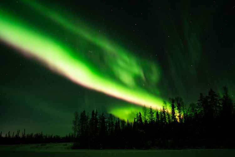 Northern lights (Aurora borealis) with starry sky above forest, Yellowknife, Canada Night Green Color Beauty In Nature Scenics - Nature Space Sky Tranquility Astronomy Tree Star - Space Plant Tranquil Scene No People Illuminated Aurora Polaris Idyllic Nature Majestic Dramatic Sky Natural Phenomenon Power In Nature