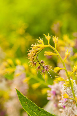 Une journée au Potager du Roi Beauty In Nature Close-up Day Flower Flower Head Flowering Plant Focus On Foreground Fragility Freshness Green Color Growth Leaf Nature No People Outdoors Petal Plant Plant Part Selective Focus Spiky Vulnerability  Yellow