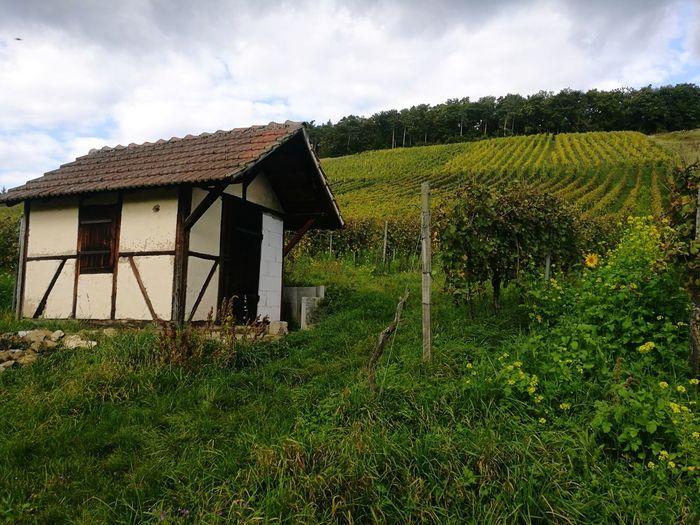 Vinyard Vinyard Weinberg Weinberge Oberderdingen Cloud - Sky Outdoors Landscape Grass Nature Day Sky No People Agriculture Field Growth Farm Oberderdingen horn