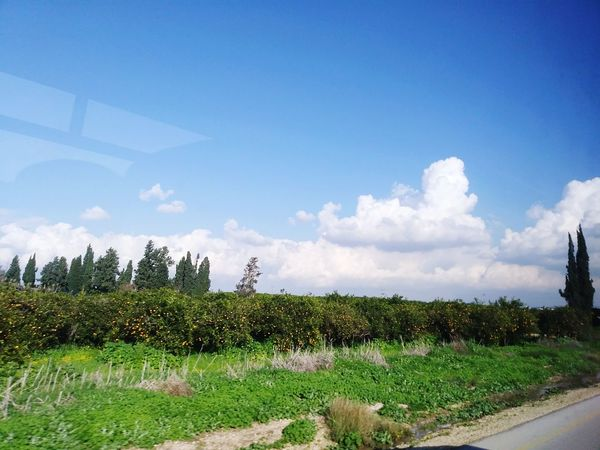 העמק שלי Agriculture Cloud - Sky Tree Rural Scene Field Growth Sky