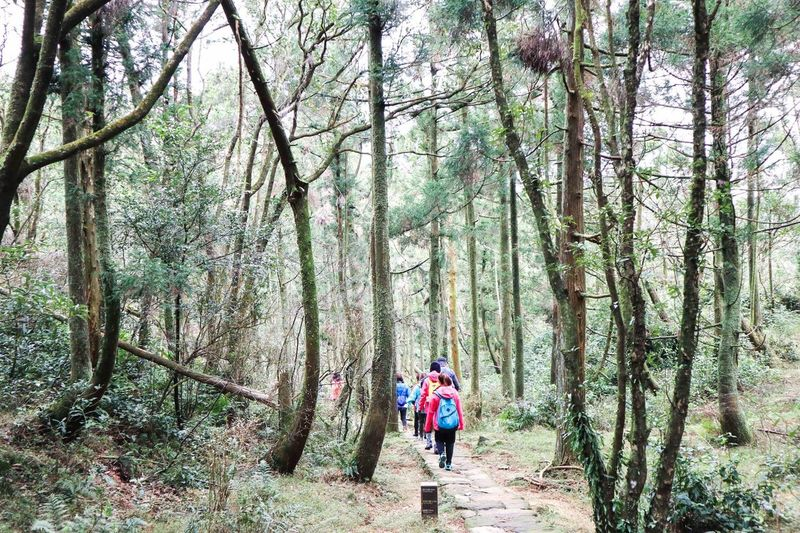 Weekend walk Taiwan Forest Hiking Backpack Adventure Walking Nature Exploration Togetherness WoodLand Tree Footpath Recreational Pursuit Leisure Activity Rear View Healthy Lifestyle Tourism Discovery Travel Outdoors Eco Tourism