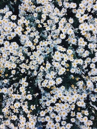 Russia Flowers Summer Macro Nature