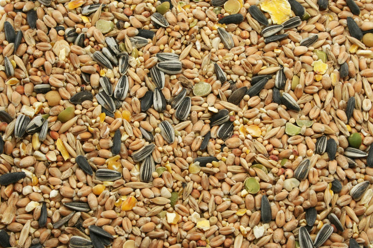 Autumn Background Texture Backgrounds Bird Seed Corn Dry Full Frame Heap High Angle View Millet Nature No People Sunflower Seeds