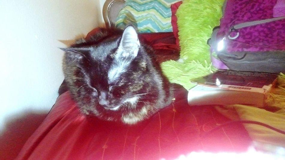 She makes doing homework less boring Cat Mallee Imbackbaby ❤❤