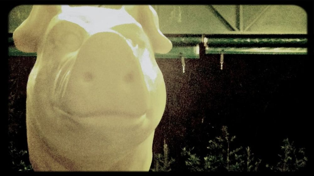 UrbanART Pig Smile Gotham