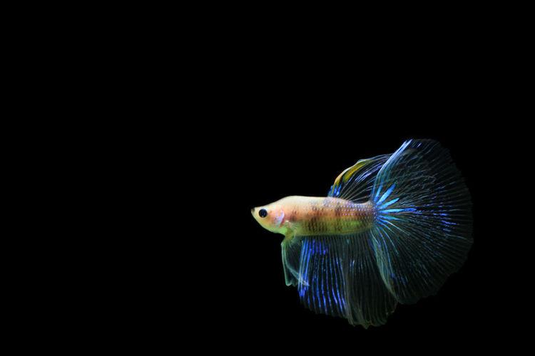 Fish Animal