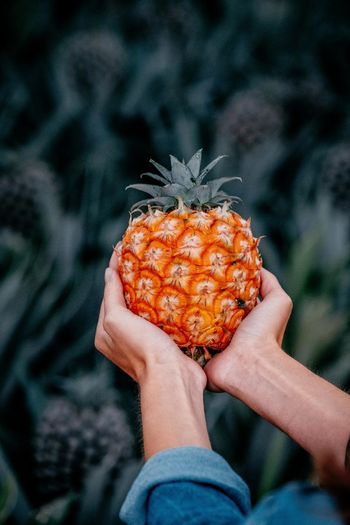 Midsection of person holding pineapple in hands