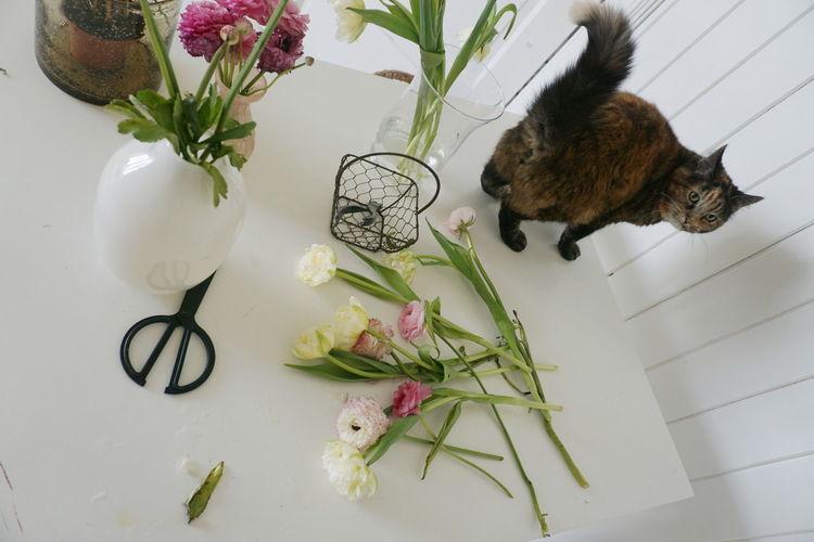 Tilt shot of cat by flowers on white table