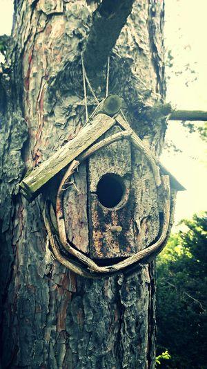 Birdhouse Tree Looks Like Fantasy