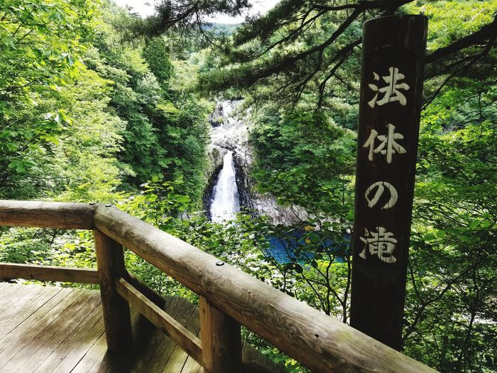 Day Wood - Material Tree Outdoors No People Green Color Nature Growth Water Grass EyeEmNewHere