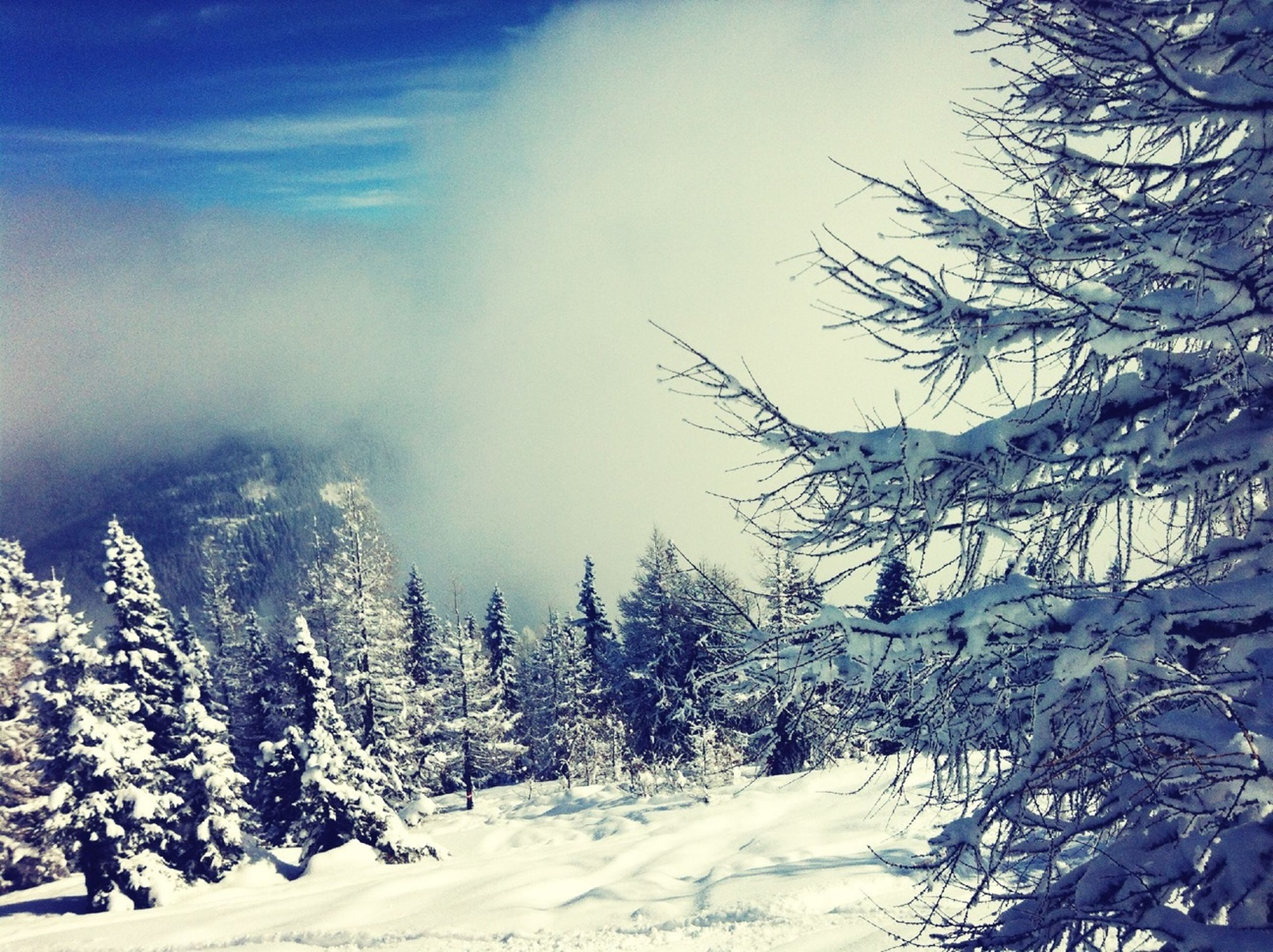 snow, winter, cold temperature, season, weather, covering, tree, tranquil scene, tranquility, scenics, beauty in nature, landscape, nature, sky, frozen, white color, mountain, snowcapped mountain, covered, bare tree