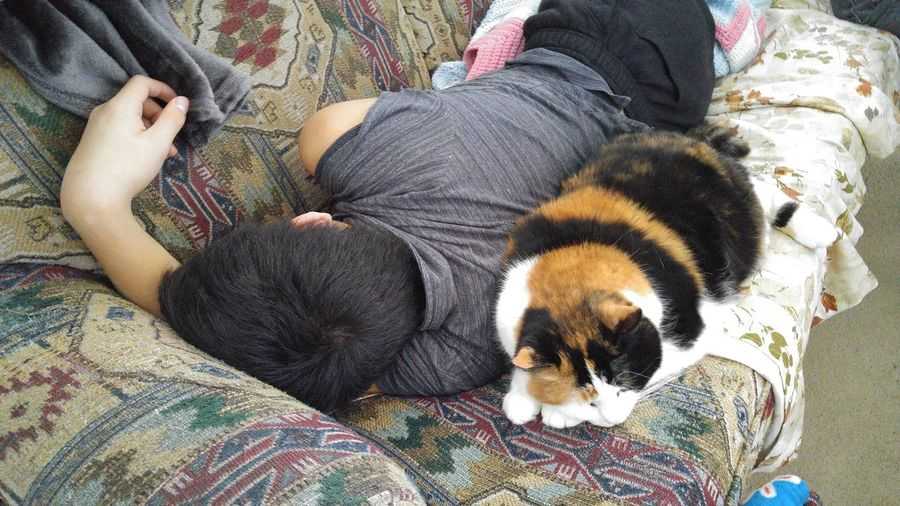 Young man and cat sleeping on a couch. Sleeping Napping Sleeping Cat Sleeping Teenager Sleeping Male Person Sleeping With Cat On A Couch Pets Domestic Animals One Animal Mammal Indoors  High Angle View Relaxation Lying Down Home Interior Real People Day Low Section One Person People Close-up Men