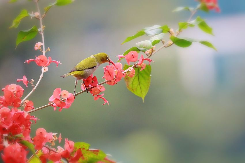Animal Wildlife Animal Themes Animals In The Wild Animal Insect Invertebrate One Animal Plant Beauty In Nature Focus On Foreground Flower No People Growth Close-up Flowering Plant Nature Leaf Flower Head Plant Part Pollination