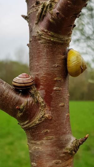 First date 😎😉💜🐌 (autotag: african elephant! 🙈🤣) Love Outdoors Draußen Statt Drinnen Tree Focus On Foreground Snail Snail🐌 Nature Beauty In Nature Animal Frühlingserwachen Couple Tree Close-up Slow
