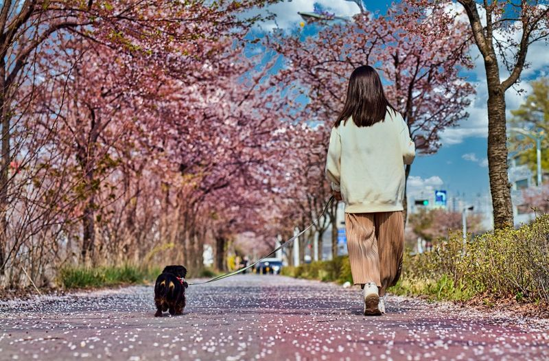 Rear view of teenager with dog on road
