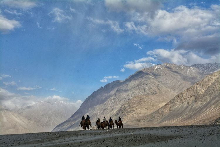Group of people riding horses on mountain