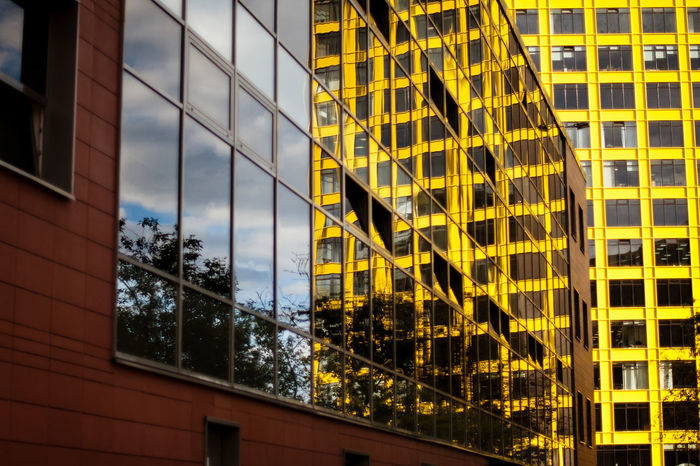 Architecture Window Building Exterior Built Structure Modern Office Building Exterior Reflection No People Skyscraper Outdoors Day City Yellow Sky Tree The Architect - 2017 EyeEm Awards Paint The Town Yellow
