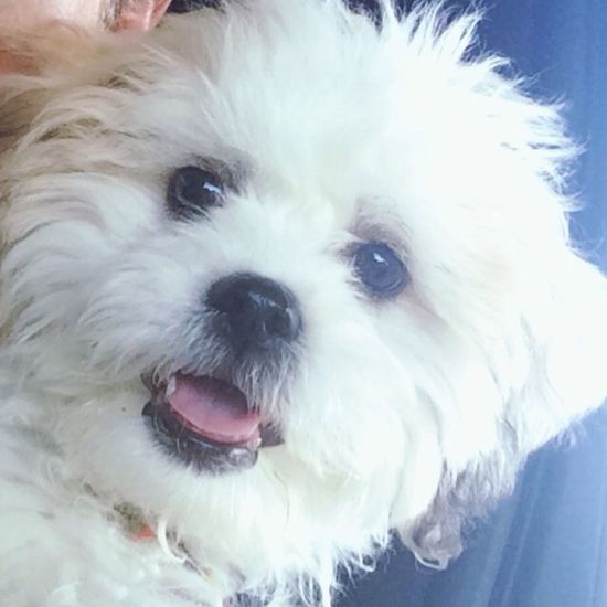 Such a handsome lil man Dog Puppy Cheese! I Love My Dog Cute Pets Adorable Check This Out Bichonfrise Puppy Love Puppies