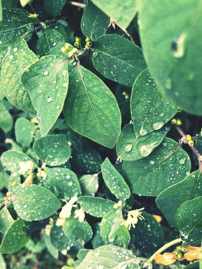 Nature Rain Green Color No People Water Wet Outdoors Drop Tree Springtime Beauty In Nature Nature Green Color Feel The Rain Beautiful