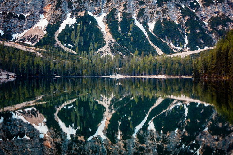 Panoramic View Of Pine Trees In Lake