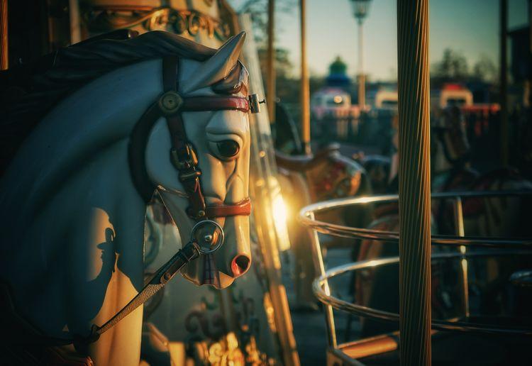 Close-up of illuminated carousel at amusement park