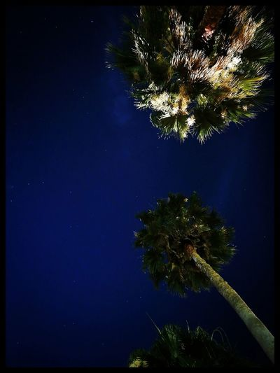 Twinkle Little Star Stars And Trees Trees Nightphotography Blue Sky Palm Tree Beauty In Nature Tranquility Awesome_shots Astronomy Travel Destinations Hong Kong Disneyland