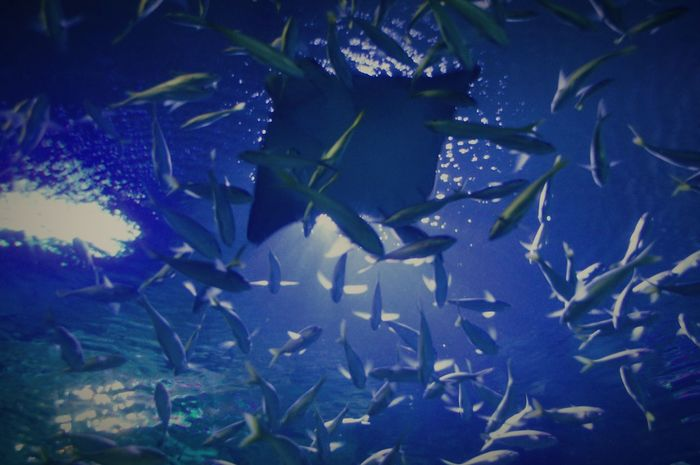Aquaria Klcc Underwater Photography