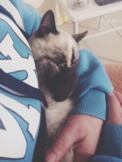 Nice Picutre Catsoneyeem Bebes
