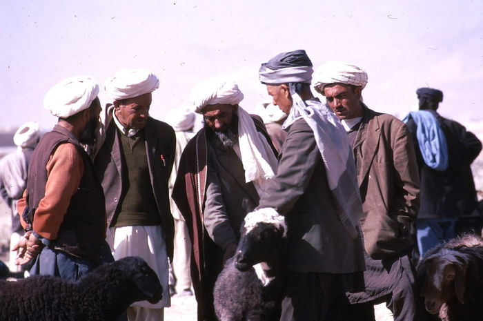 Negotiating Sheep Sale at Market Afghani Men Afghanistan Black Sheep Blue Sky Business Composition Crowd Culture For Sale Kabul Lifestyles Market Sheep Medium Group Of People Men Negotiating Outdoor Photography Performance Selling Sheep Market Standing Sunlight And Shadow Togetherness Traditional Clothing Unusual