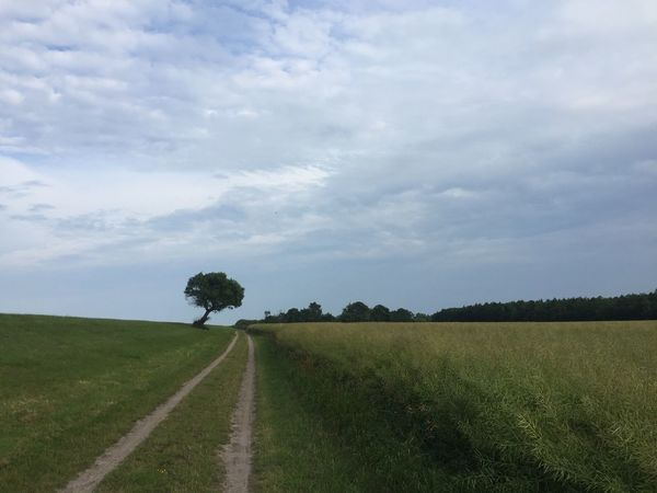 Landscape Agriculture The Way Forward Grass No People Scenics Tree