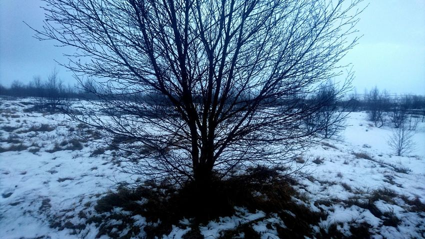 Winter Snow Bare Tree Beauty In Nature Cold Temperature Tranquil Scene Alone No People Tranquility Nature TCPM TCPM Snow Covered Iceland Memories Centred Ready To Grow Silent Moment Growth Help Nakedtree Nakednature Vulnerability  The Great Outdoors - 2017 EyeEm Awards