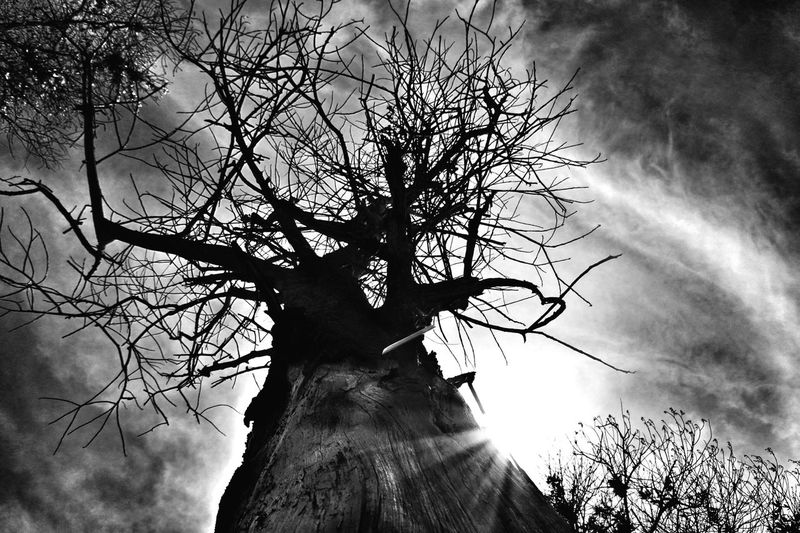 Power of Black & White portrait by a low angle facing up the sky to capture the sun ray strike by the burned tree. Nikonphotography Nikon Sihouette  Mirrorless Disaster Afterburn Fall Of Nature Nature Bnw_captures Bnw_society Bnw_friday_challenge Monochrome_life EyeEm Best Shots - Black + White Popular